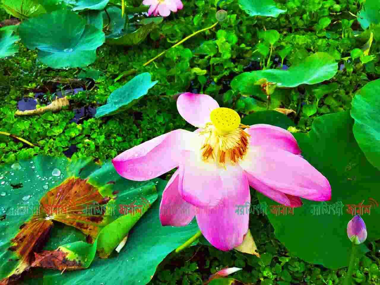 Chinadi_bil_shibpur_narsingdi_narsingdi_district_narsingdijournal